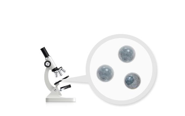 既存の受精卵 選別方式  - 肉眼検査により移植する胚芽を選択